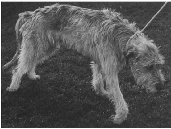 FCE Dog