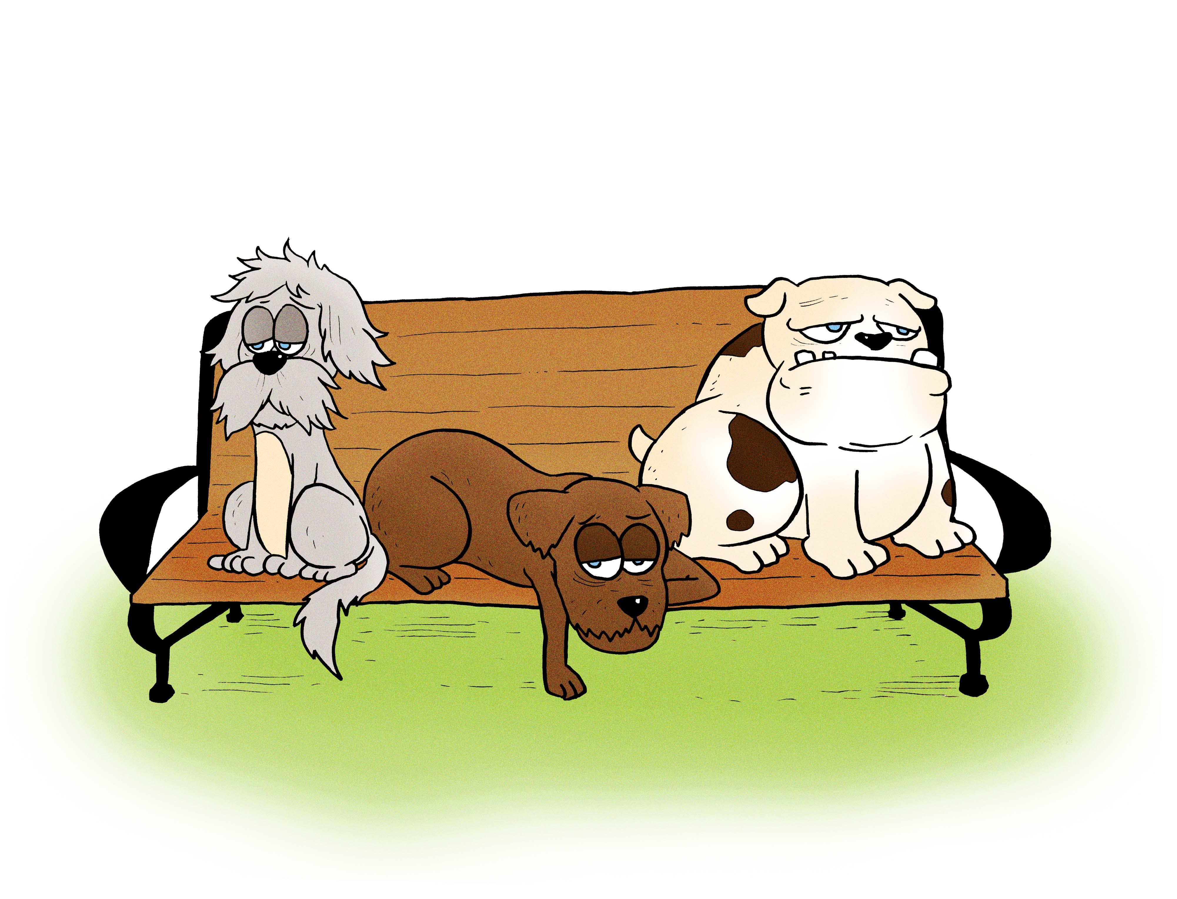 Senior Dog Class